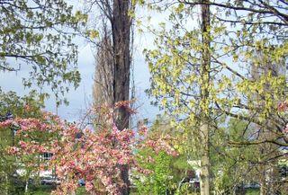 Spring colors near fremont bridge
