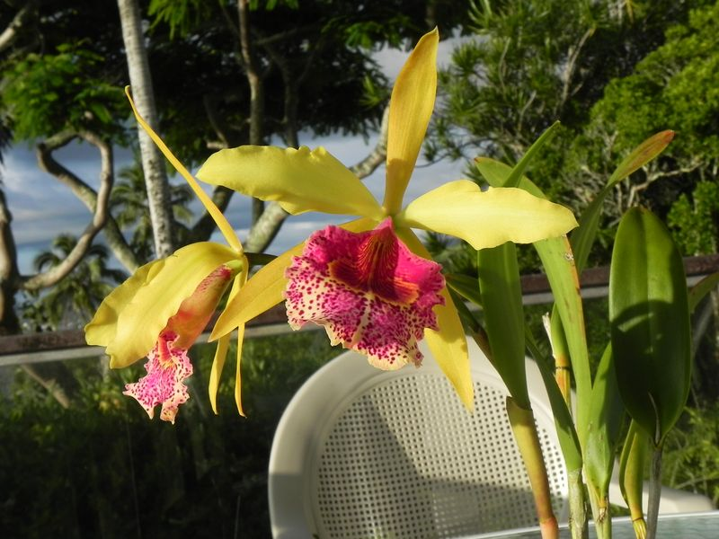 Orchid 4