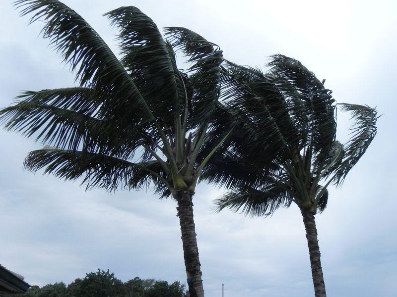 Wind palms
