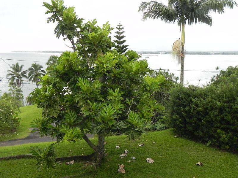 Tree 1f