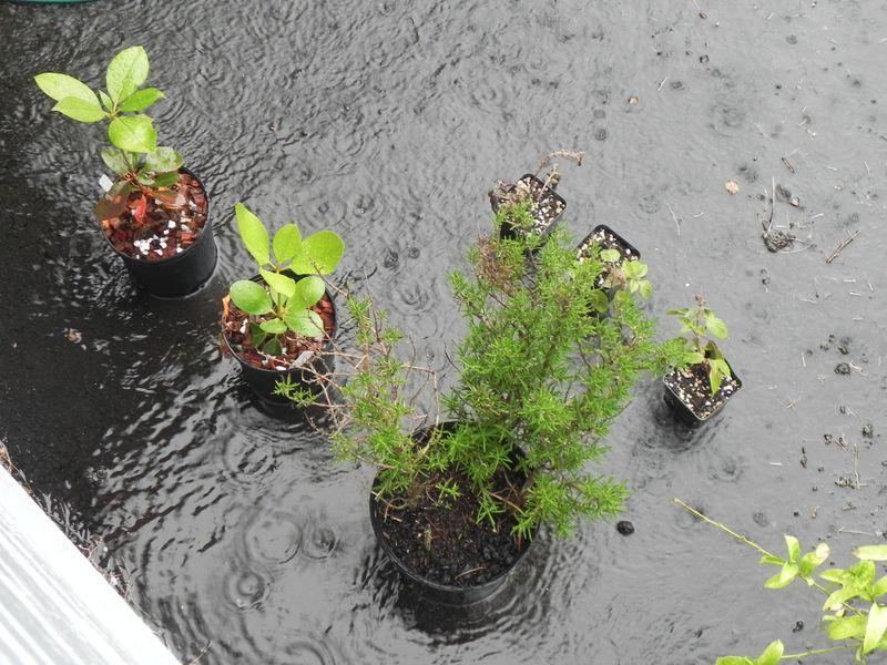Plants in rain