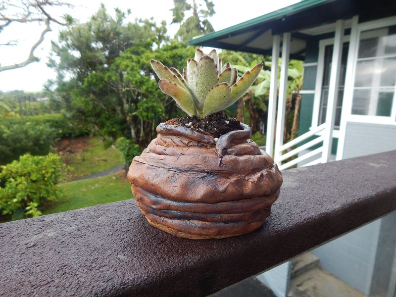 Pot (2)