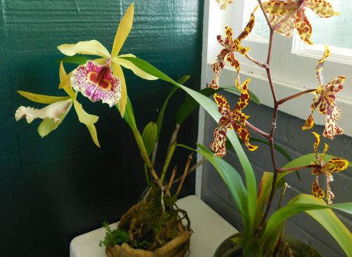 Orchids_edited-1