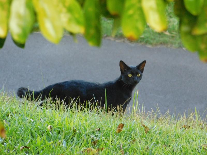 Blackie1