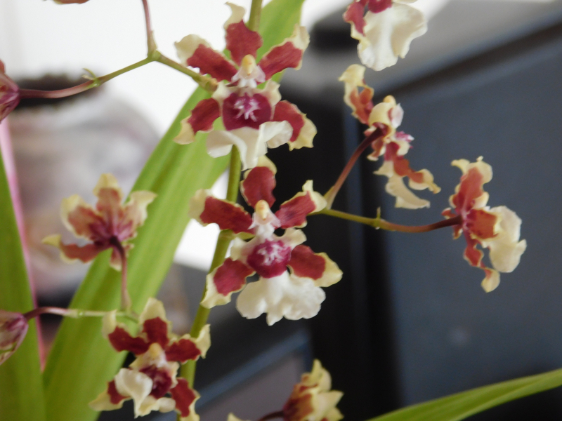 Orchids 6